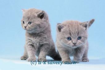 http://snow.alvas.ru/Foto2/Kurochkina_414.jpg